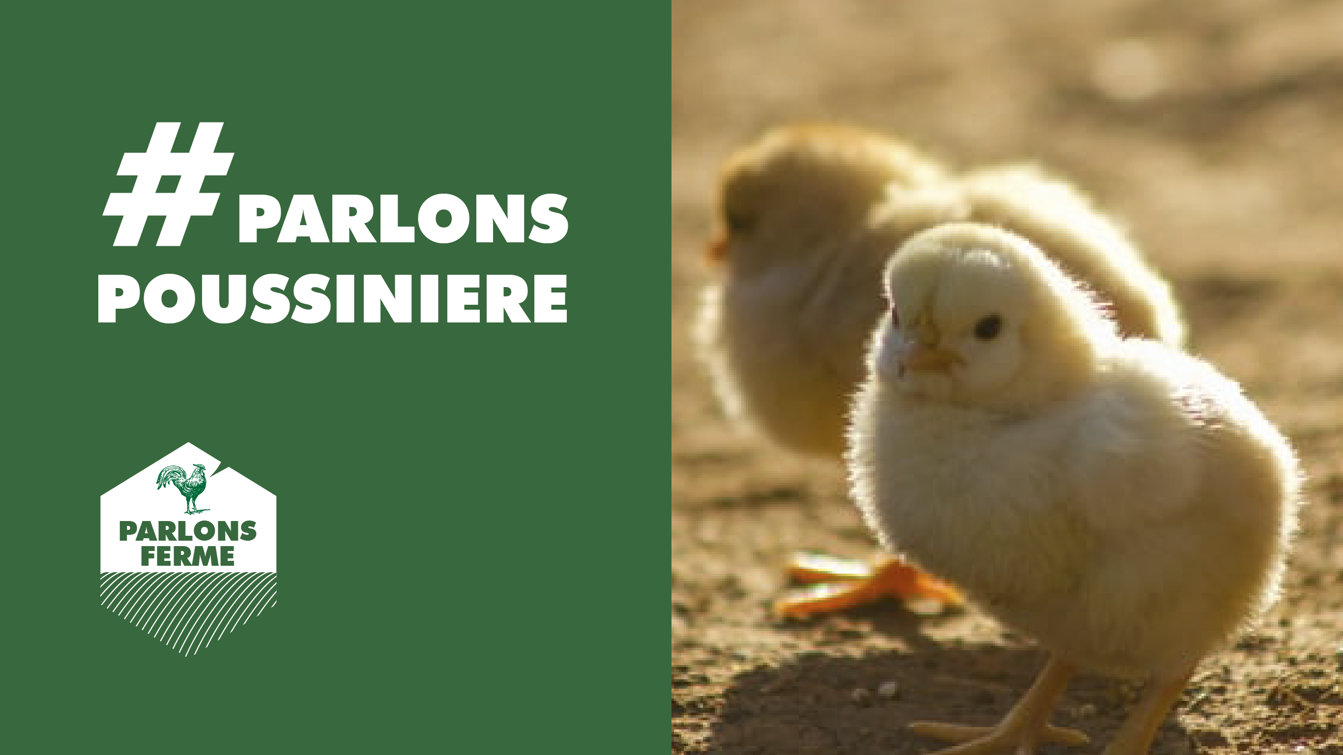 #PARLONSPOUSSINIERE 🐥